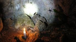 Devil spider Belize